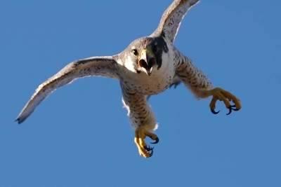 Medio Ambiente recibe más de 600 notificaciones para la recogida de especies amenazadas