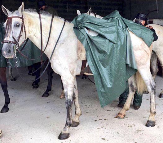 Accidente de tráfico en Cazalegas provocado por un caballo robado