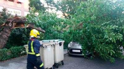 Caen dos árboles, uno sobre un coche, en Talavera