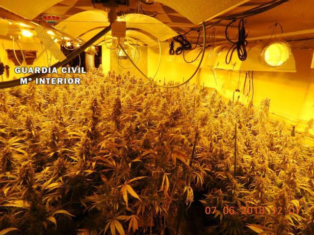 Detenidas dos personas por cultivar 211 plantas de marihuana