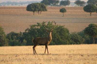 García-Page pide por carta al Gobierno de España que no prohiba la caza