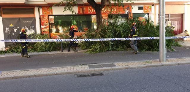 ÚLTIMA HORA | Cae un árbol en una calle de Talavera