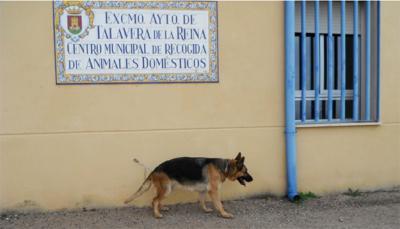 TALAVERA | Diputación aportará 8.000 euros al Centro de Recogida de Animales