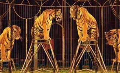 Castilla-La Mancha prohíbe los animales salvajes en circos itinerantes