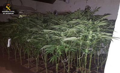 Cultivaba 87 plantas de marihuana en el interior de una vivienda