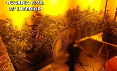 Cultivaba 1.318 plantas de marihuana en una vivienda unifamiliar