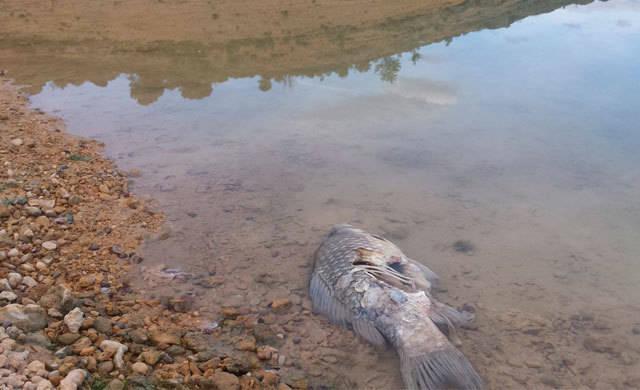 Alerta por la cabecera del Tajo que se queda sin agua que trasvasar