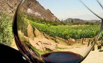 El Gobierno regional impulsará las 'rutal del vino' en la región