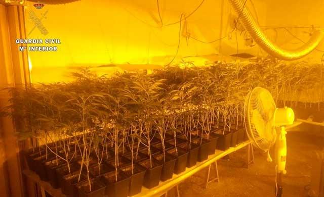 Detienen a madre e hija por cultivar 1.085 plantas de marihuana