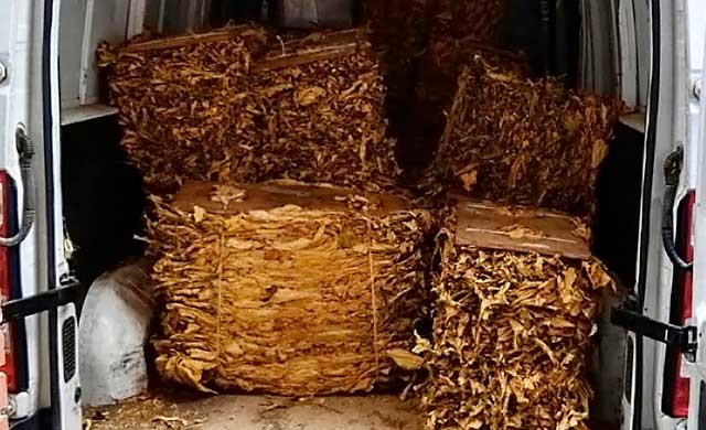 Incautan 7.500 kilos de hoja de tabaco valorados en 1,8 millones