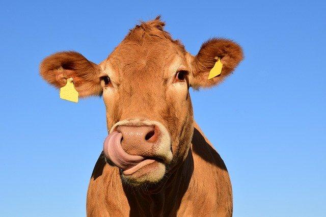 Detectan un foco de ántrax en una ganadería de la región
