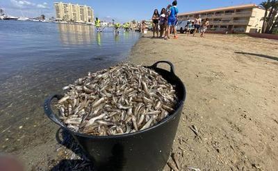 Los peces muertos inundan las orillas del Mar Menor (vídeo)