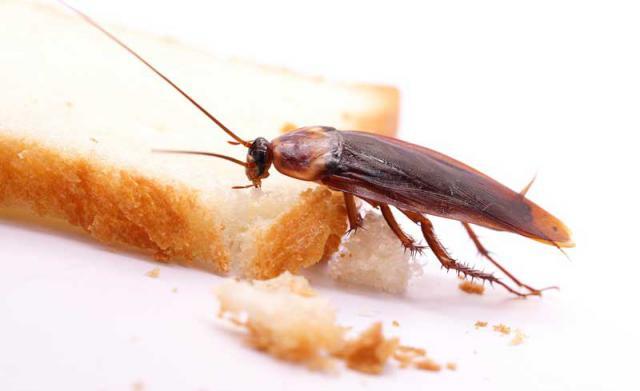 Plaga de cucarachas este verano: ¿cómo protegerse?