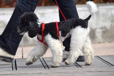 TALAVERA | Recuerdan las normas que tienen que cumplir los dueños de los perros