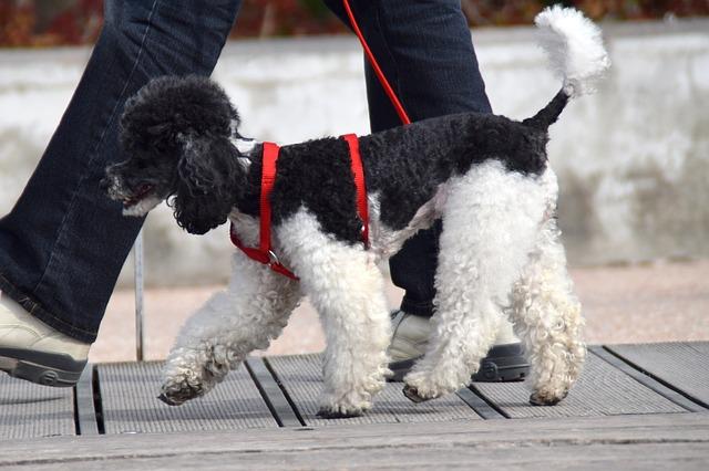 TALAVERA   Recuerdan las normas que tienen que cumplir los dueños de los perros