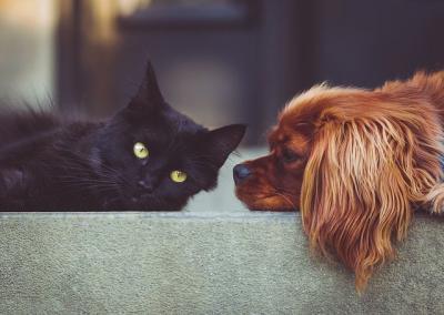 CORONAVIRUS | Las personas podrían transmitir el Covid-19 a perros y gatos