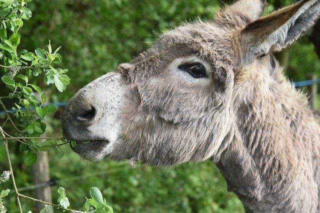 La AAVV Fray Hernando ofrece un burro de Talavera para que Greta Thunberg llegue a Madrid