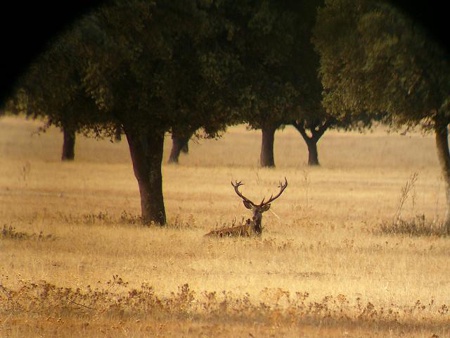 Piden poder cazar en los Parques Nacionales de Monfragüe y Cabañeros