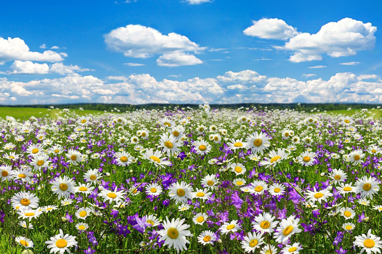 https://www.lavozdeltajo.com/fotos/49/efectos-psicologicos-y-para-la-salud-de-la-primavera-en-las-personas-mayores.jpeg