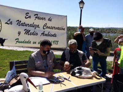 Talavera identifica y protege a sus cigüeñas