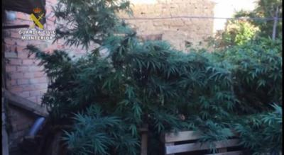 32 detenidos y casi 400 kilos de droga intervenidos en Ciudad Real