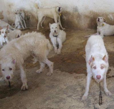 Castilla-La Mancha contará con una Ley de Bienestar, Protección y Defensa de los animales