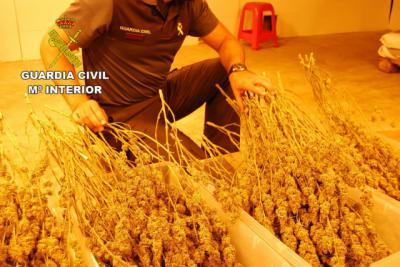 Incautan 44 kilos de marihuana y detiene a dos personas en Fuentenovilla