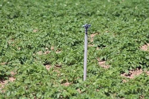 Junta: 'Hay condiciones para que el agua de riego en Levante venga ya de las desaladoras'