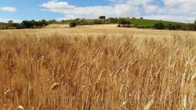 Agricultura aumenta hasta los 20,5 millones el crédito para la incorporación a la agricultura ecológica