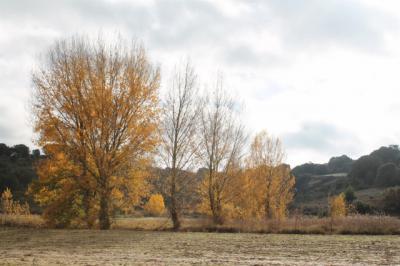Noviembre llega con temperaturas otoñales en el Puente de Todos los Santos