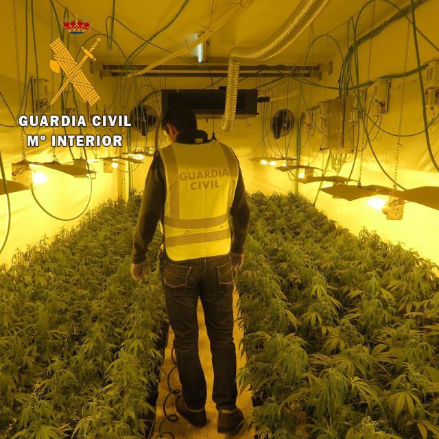 Desmantelada una plantación de marihuana en Montearagón con más de 2.000 plantas