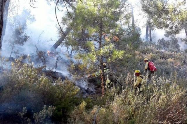 Controlado el incendio forestal declarado en Paterna del Madera