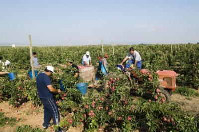 El Gobierno central intensificará las inspeccionespara que se cumpla la ley en las campañas agrícolas de CLM