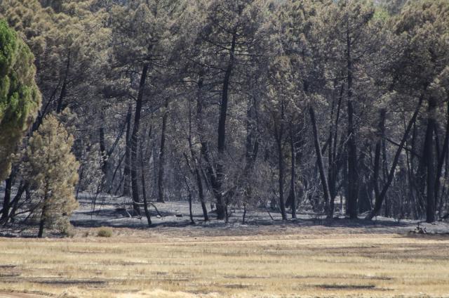 Controlado el incendio de Barchín del Hoyo