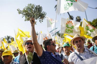 Olivareros de CLM reclaman en Madrid mecanismos para paliar la