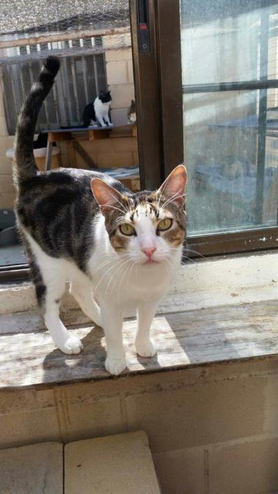 Urgen a tomar medidas para controlar la superpoblación de gatos en Toledo