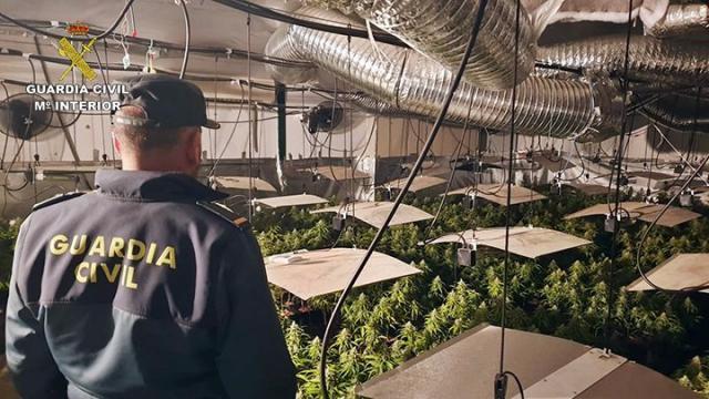 Guardia Civil busca a un vecino de Talavera por pertenecer a una banda dedicada al cultivo y tráfico de droga