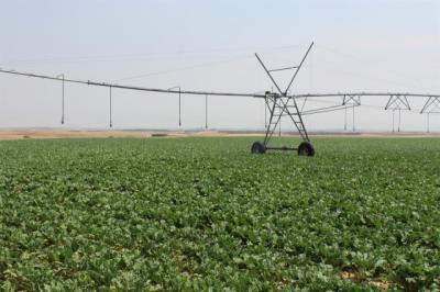 ACTUALIDAD | Castilla-La Mancha pide ampliar el periodo de solicitud de las ayudas de la PAC