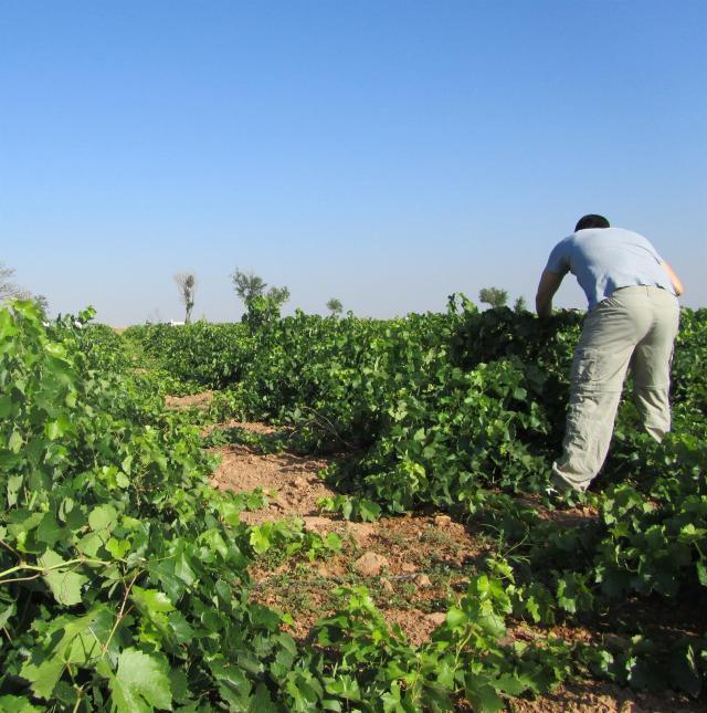 ESTADO DE ALARMA | Incorporar a parados e inmigrantes en el campo
