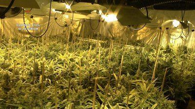MARIHUANA | Otra plantación más... 2.000 plantas y dos detenidos en un pueblo de Toledo (fotos)