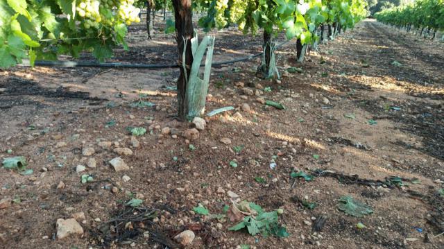 AGRICULTURA | CLM y Extremadura, las zonas más afectadas por los daños de las tormentas