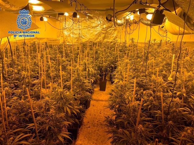 EN UN PUEBLO DE TOLEDO | Desmantelan un centro de producción con 18 kilos de marihuana