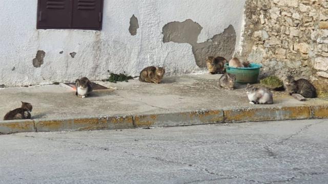 CURIOSIDADES | En este pueblo los gatos triplican a los vecinos