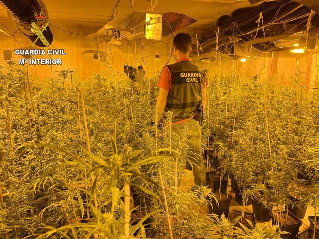 Dos detenidos y 1.590 planta incautadas en El Casar
