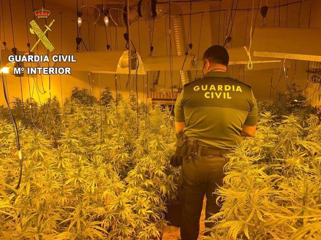 241 plantas de Marihuana y un detenido de 24 años en San Martín de Pusa