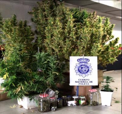 Detenido por cultivar marihuana en las zonas comunitarias de un edificio