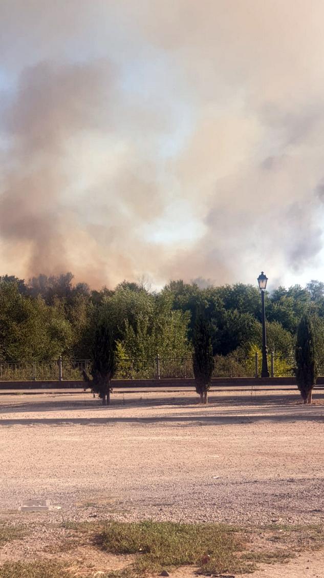 Nuevo incendio en una isla del río Tajo a su paso por Talavera