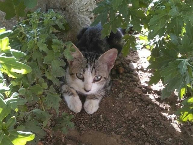 AMIBICHOS colabora con el Ayuntamiento para el control de la colonia de gatos de La Milagrosa