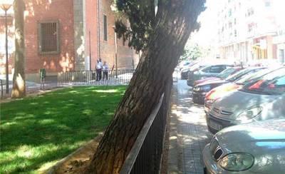 Nueva denuncia vecinal sobre el mantenimiento de los árboles del municipio