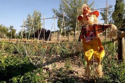 El colegio Clemente Palencia inaugura su proyecto de huerto urbano 'Cultivando vidas'
